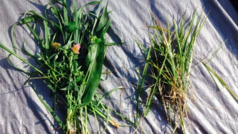 Why we do it … the grass doesn't lie