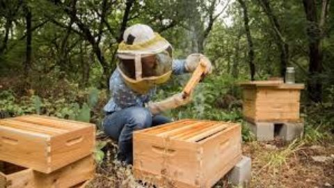 A Whole Bunch of Bees Coming to Maple Valley Farm Pastures